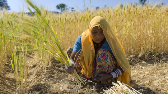 5 Ideas for Doubling the World's Food Supply