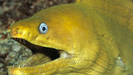 Why are eels slippery?