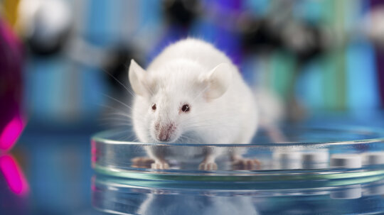 Why Do We Experiment on Mice?