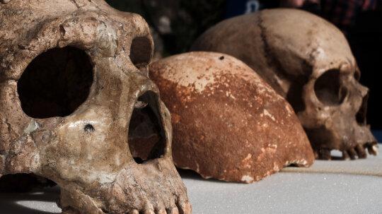 10 Extinct Hominids