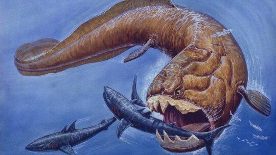 9 Extinct Exotic Sea Creatures
