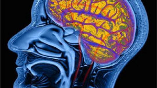 What is the extrasensory brain?