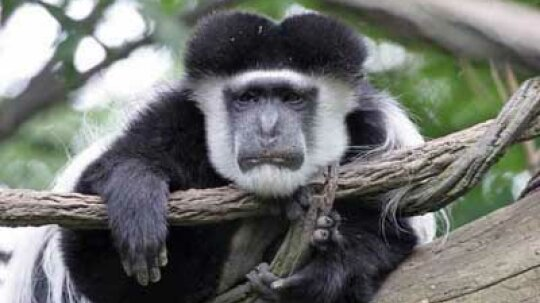 Family Vacations: Bronx Zoo