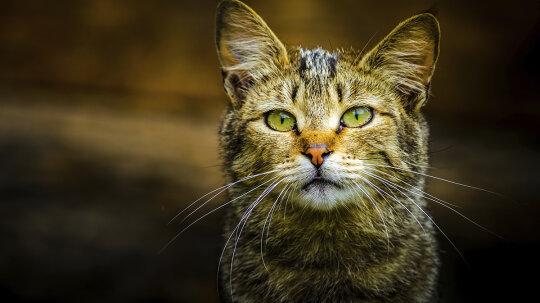 Do feral cats spread disease?