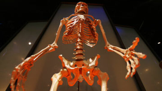 Is there fossil evidence for human evolution?
