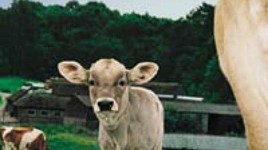 Save vs. Splurge: Grass-fed Beef