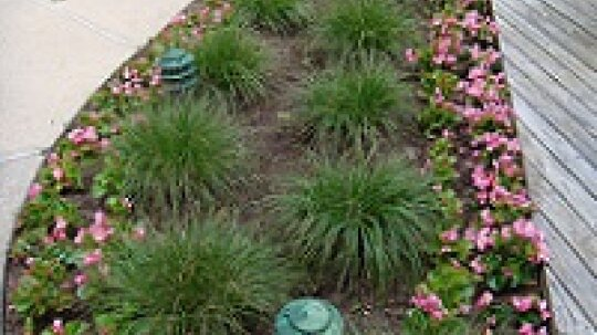 Quick Fixes to Make Your Garden Great