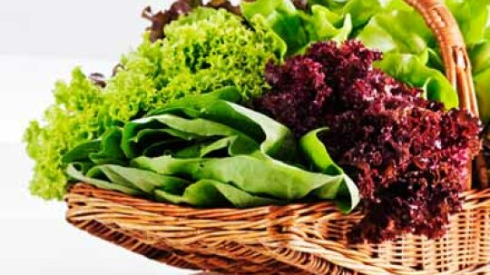 Why Does Lettuce in a Bag Stay Fresh Longer Than a Head of Lettuce?
