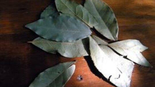7 Herbs That Deter Flies Naturally!