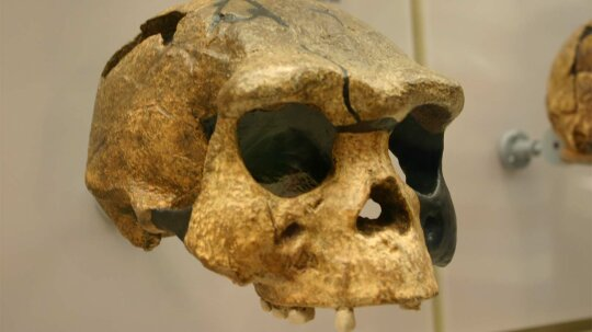 Laziness May Have Doomed This Human Ancestor