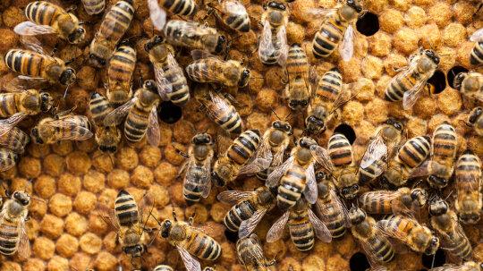 Do Honeybees Hold the Secret for Faster Web Servers?