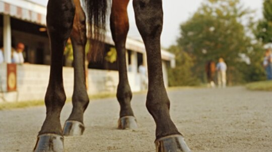 Do horses with broken legs have to be shot?