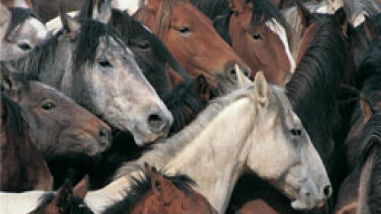 Is there any way to treat an allergy to horses?