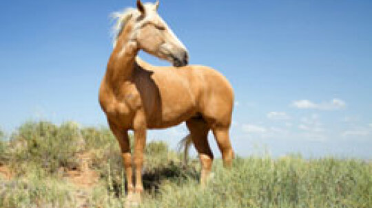 What are some symptoms of allergies to horses?