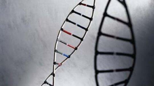 How Hereditary Illnesses Work