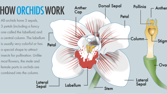 How Orchids Work