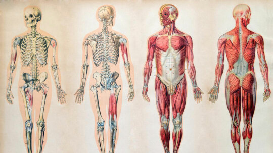 Quiz: Do You Know Where Body Parts, Like the Spleen, Are Located?