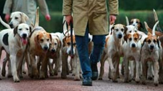 Top 10 Hunting-dog Breeds