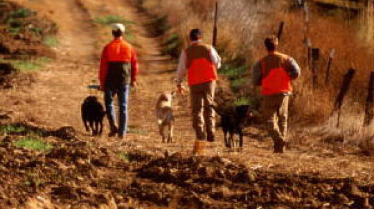 How Hunting with Dogs Works