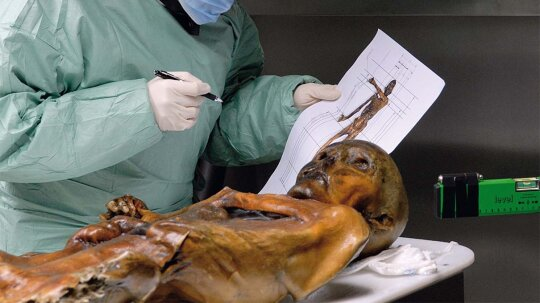 Otzi the Iceman Ate a High-fat Last Meal