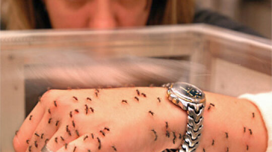 Is Insect Repellent Bad for Your Skin?