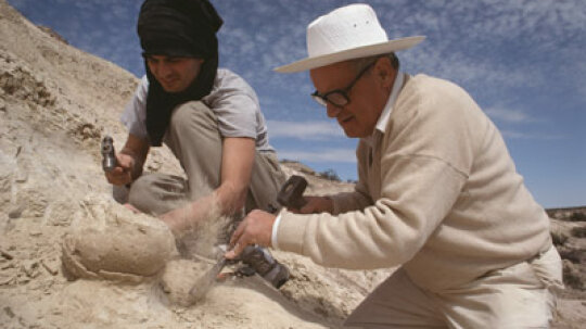 How do scientists know what's inside dinosaur eggs?