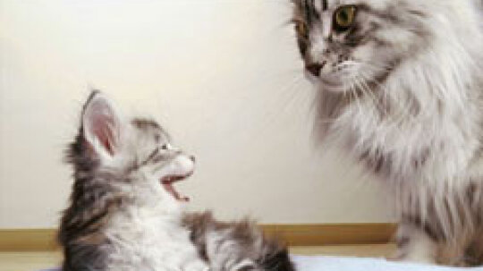 How can you better control my cat dander allergies?