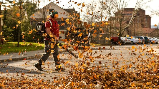 Why Do People Find Leaf Blowers So Irritating?