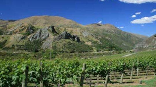 Ultimate Guide to the Marlborough Wine Region