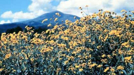 New Mexico Scenic Drives