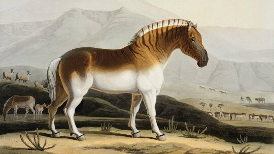 How the Quagga, an Extinct Zebra Sub-species, Is Being Revived