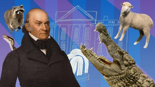 Ridiculous History: Bears, Raccoons — and Alligators? — in the White House