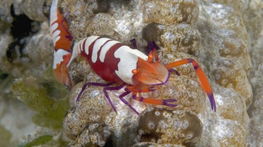 How Shrimp Shells Help Wounds Heal Faster