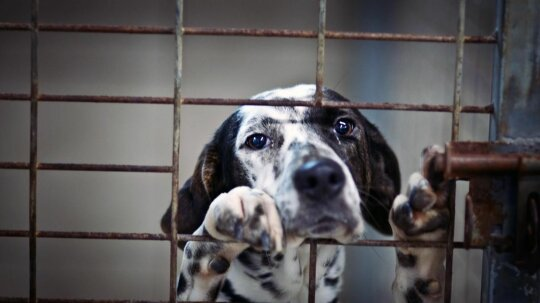 USDA Deletes Animal Abuse Online Records