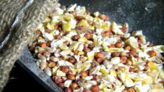 Organic Chicken Feed Is Cheep When You Make It Yourself