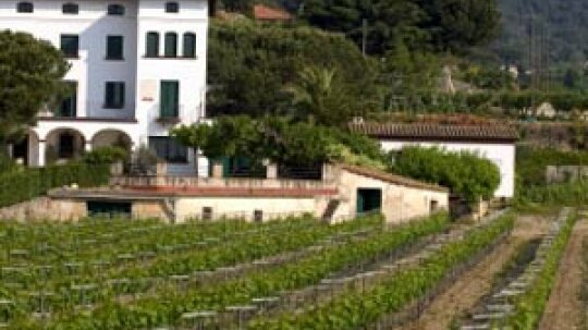 Ultimate Guide to the Penedes Wine Region