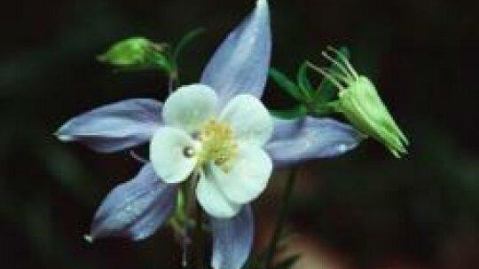 Perennial Flowers Image Gallery