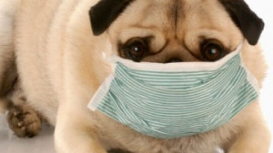 Myths and Misconceptions About Pet Allergies