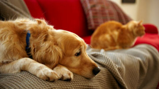 Can owning a pet reduce the value of your home?