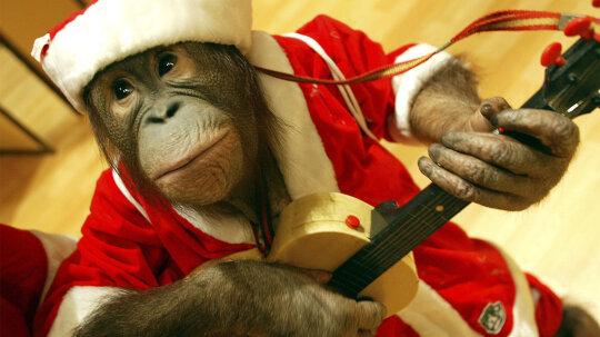 6 Reasons Monkeys Should Never Be Pets
