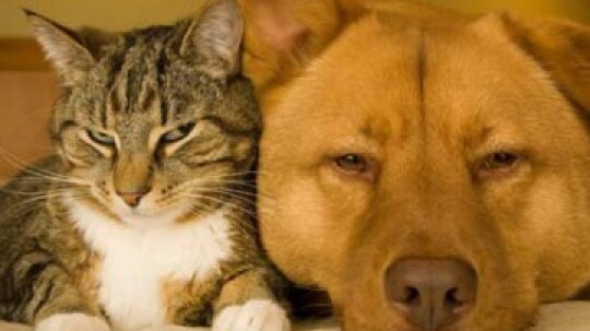 Cat and Dog Allergens