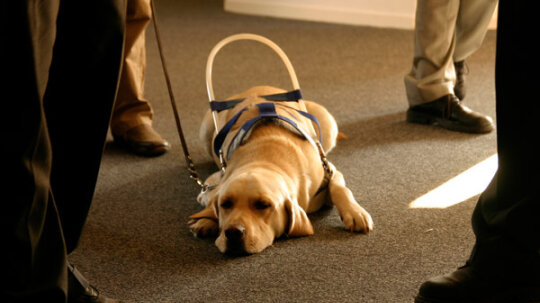 How Guide Dogs Work