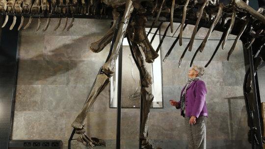 Why were so many prehistoric animals so big?