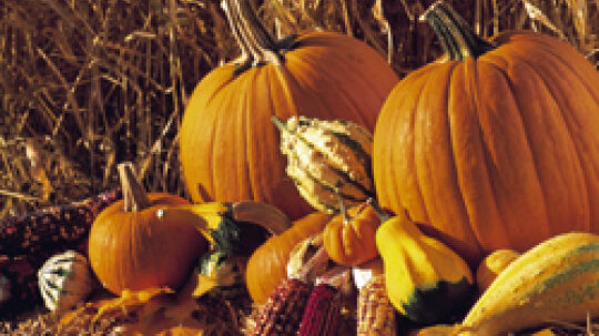 5 Pumpkin Recipes for Your Beauty Routine