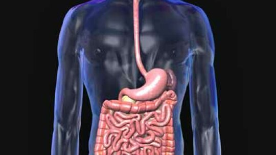 How Does Your Stomach Keep From Digesting Itself?