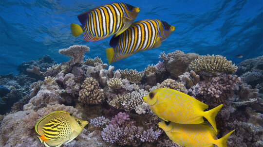 It Takes a DJ: Healthy Reef Sounds May Lure Fish to Damaged Reefs