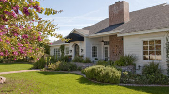 Repairing Insect Damage to Your Home