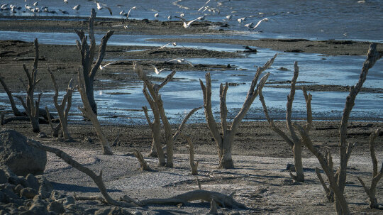 How the Salton Sea Became an Eco Wasteland