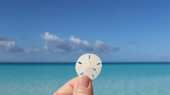 Is It OK to Take Sand Dollars Off the Beach?