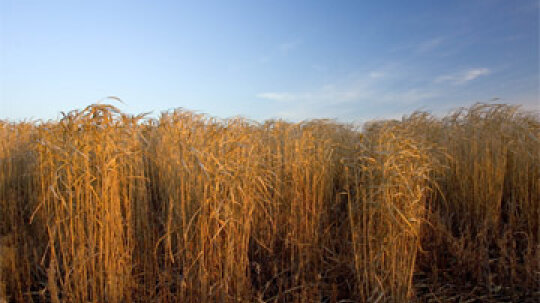 How do second-generation biofuels work?